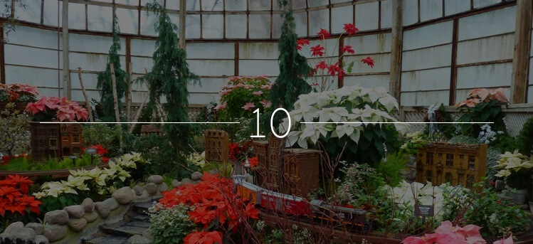 Winter Flower & Train Show at the Lincoln Park Conservatory