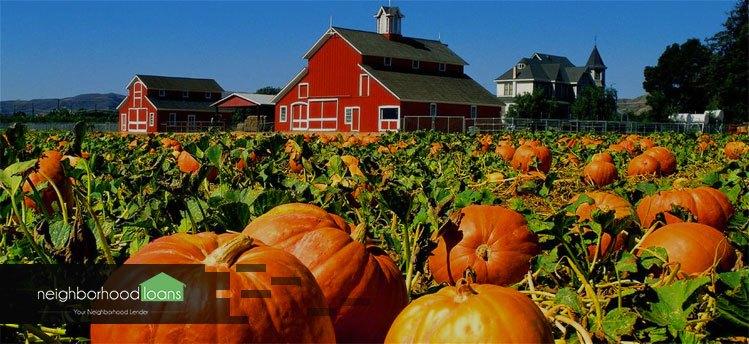 16.-Pumpkin